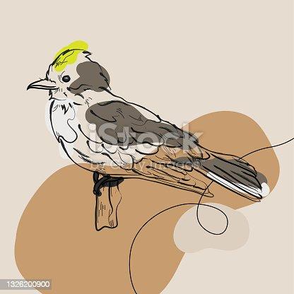 Minimalist Ink Line Art of Eastern Kingbird in profile