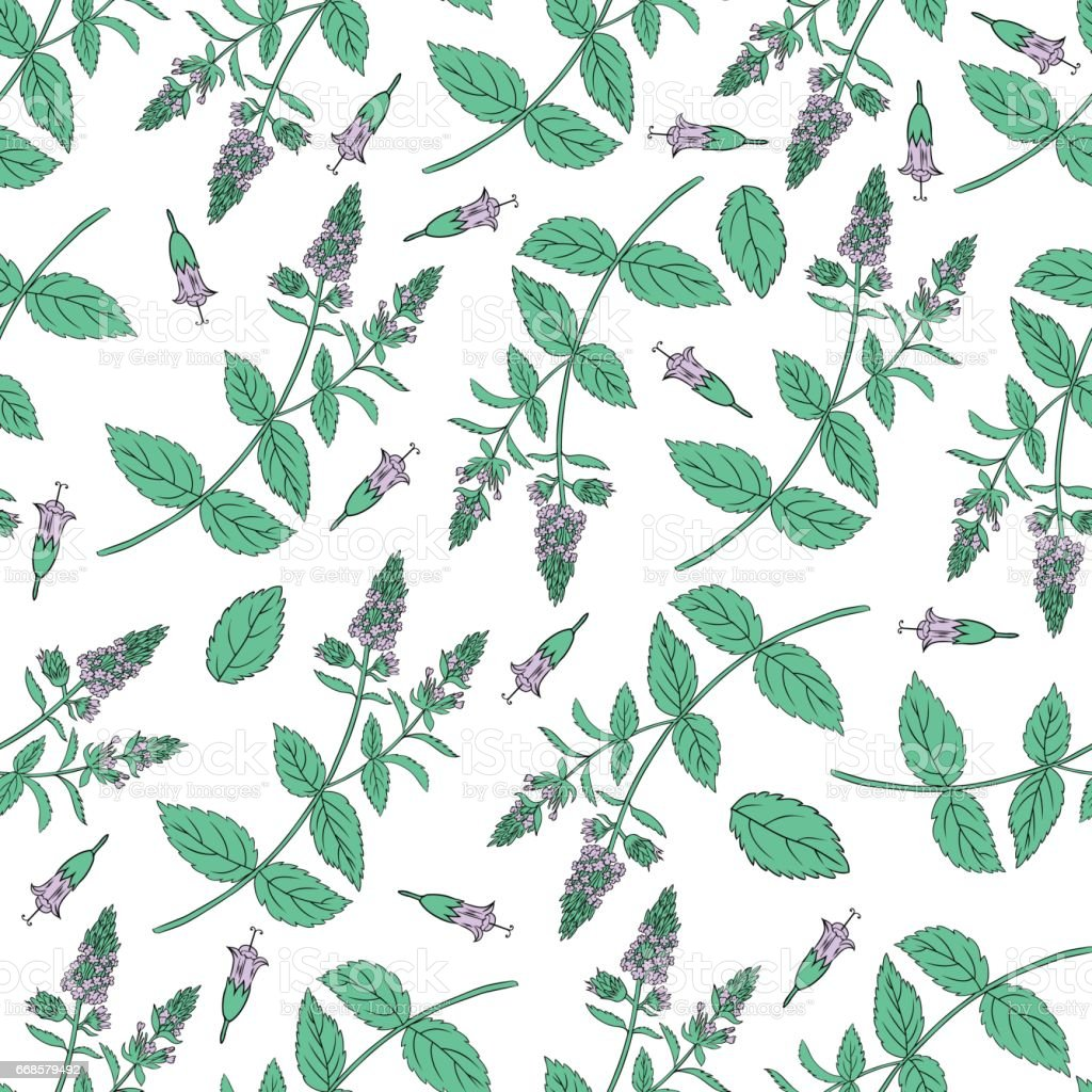Mint Branch Leaves Flower Isolated On White Hand Drawn Vector Spicy ...