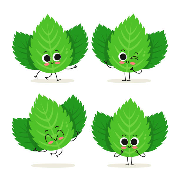 Mint. Cute herb vector character set isolated on white Mint. Cute herb vector character set isolated on white mint leaf culinary stock illustrations
