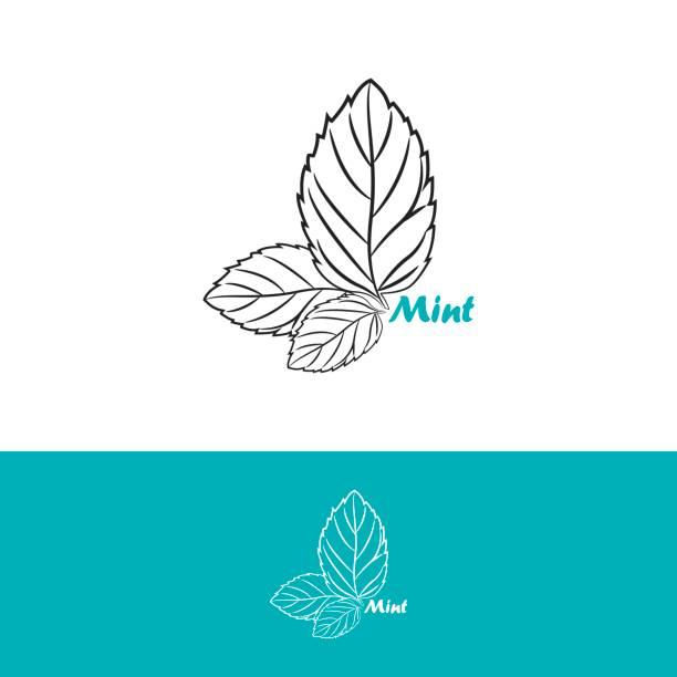 Mint emblem design vector template Mint emblem design vector template mint candy stock illustrations