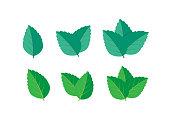 istock Mint green vector illustration set. Mint logo vector 997724394