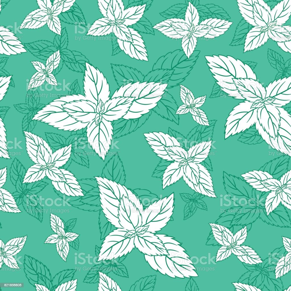 Mint Leaf Peppermint Isolated On Green Background Hand Drawn Vector ...