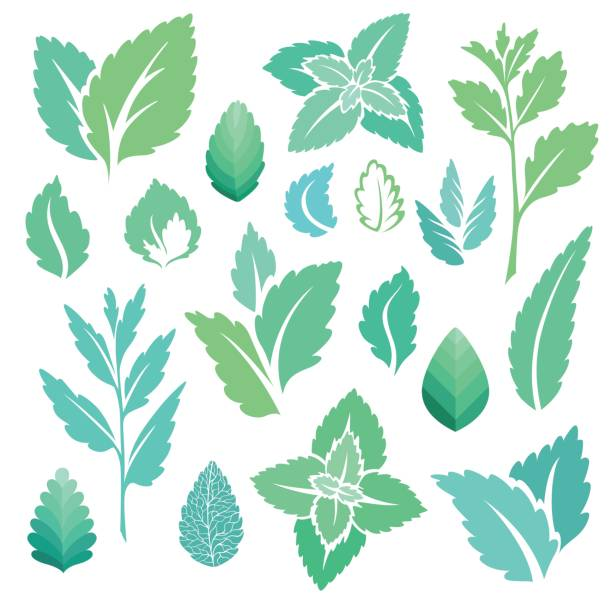 Mint leaves icons set. Mint leaves and branches icons set. mint leaf culinary stock illustrations