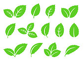 abstract green leaves set icons on white background