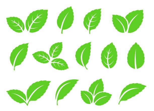 ikony zestawu liści mięty - liść mięty przyprawa stock illustrations