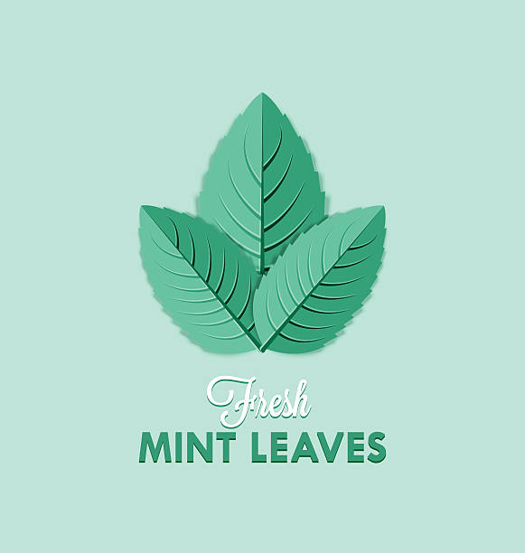 Mint leaves Fresh mint leaves isolated on pale green background mint candy stock illustrations
