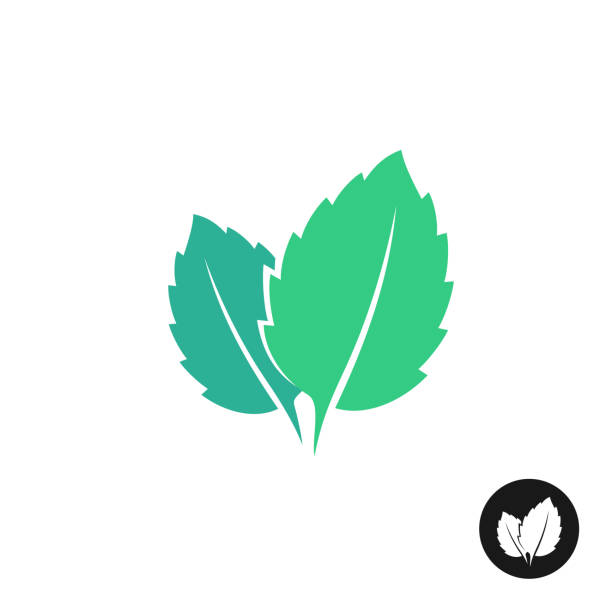 Mint leaves vector symbol. Two leaves of a mint with one color bla Mint leaves vector symbol. Two leaves of a mint with one color black version. mint leaf culinary stock illustrations