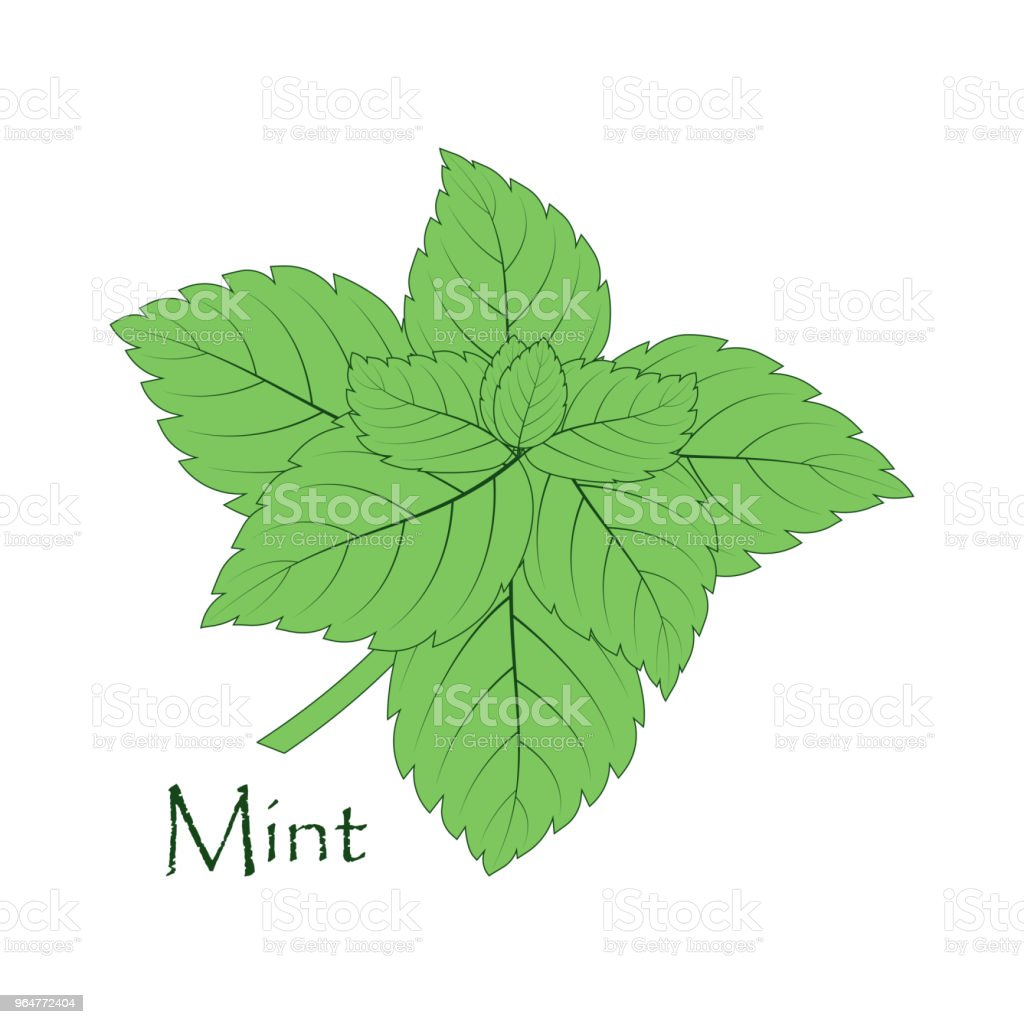 mint on the white royalty-free mint on the white stock vector art & more images of backgrounds
