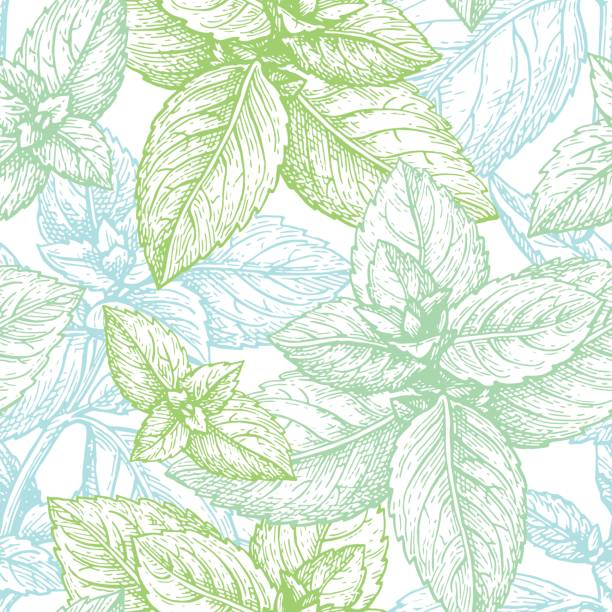 Mint seamless pattern. Mint seamless pattern. Summer background. Hand drawn vector illustration. mint leaf culinary stock illustrations
