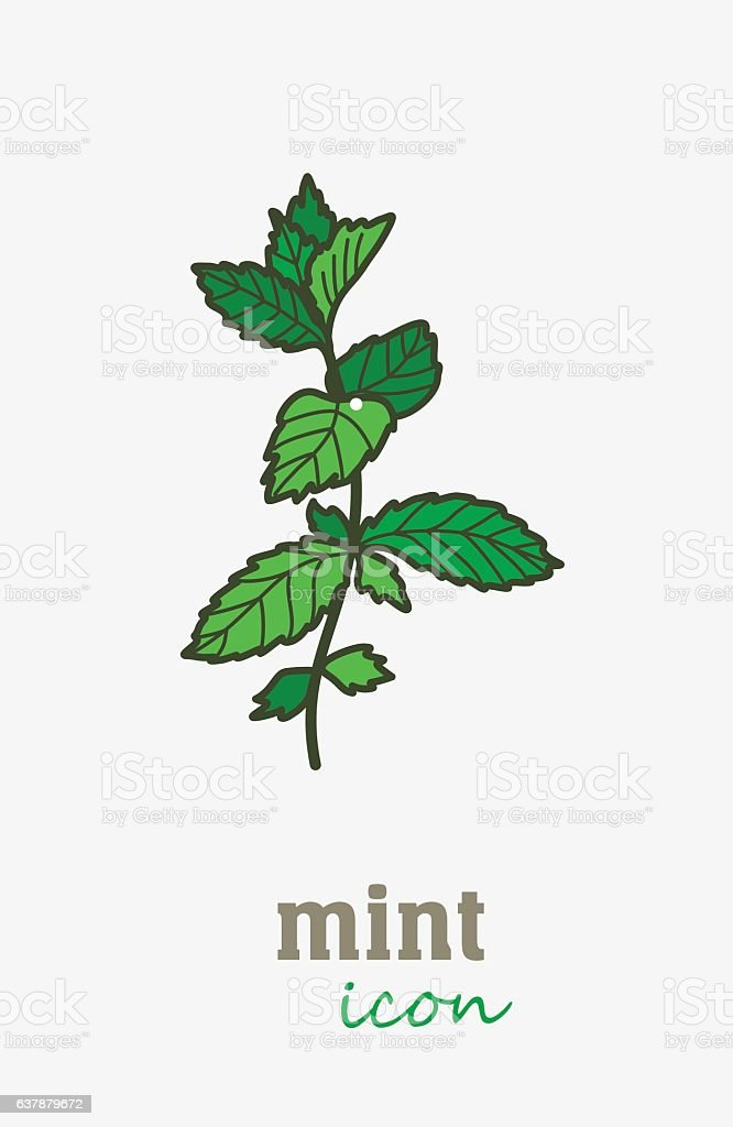 Mint vector icon. Vegetable green leaves vector art illustration