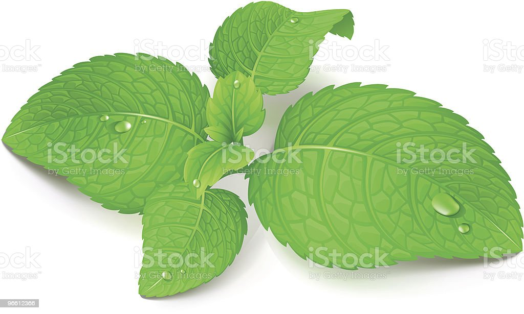 Mint royalty-free mint stock illustration - download image now