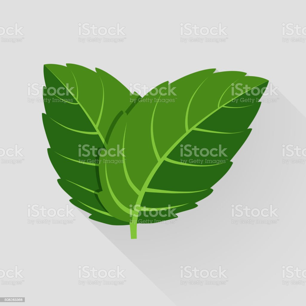 Mint vector leaves vector art illustration