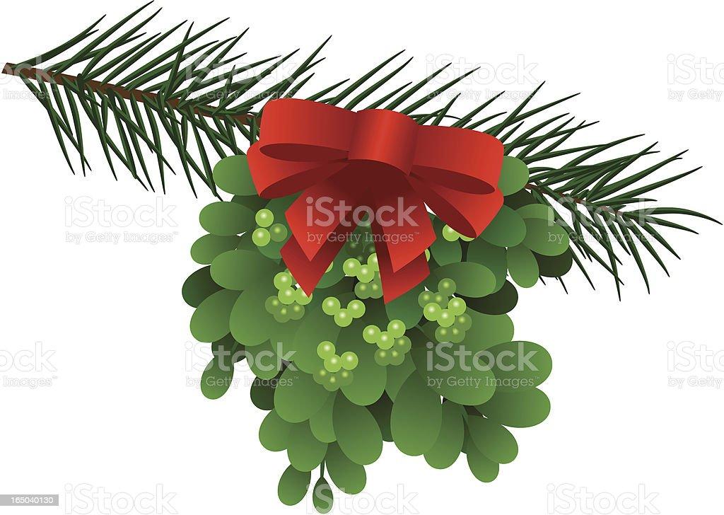 Mistletoe on Pine Branch royalty-free stock vector art