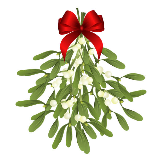 Mistletoe Illustrations, Royalty-Free Vector Graphics ...
