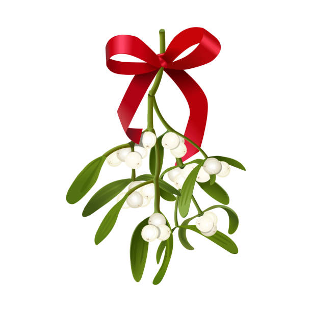 24 705 Mistletoe Illustrations Royalty Free Vector Graphics Clip Art Istock Pngtree offers over 18 mistletoe png and vector images, as well as transparant background mistletoe clipart images and psd files.download the free view our latest collection of free mistletoe png images with transparant background, which you can use in your poster, flyer design, or presentation. 24 705 mistletoe illustrations royalty free vector graphics clip art istock