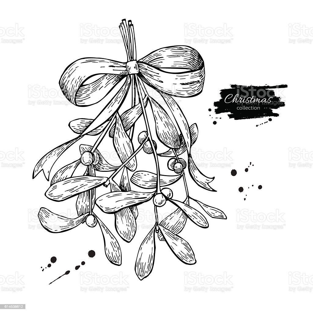 Mistletoe with bow and ribbon. Christmas decor plant. Hand drawn vector art illustration
