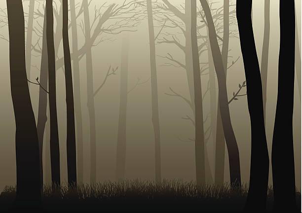 bildbanksillustrationer, clip art samt tecknat material och ikoner med misty woods - fasa