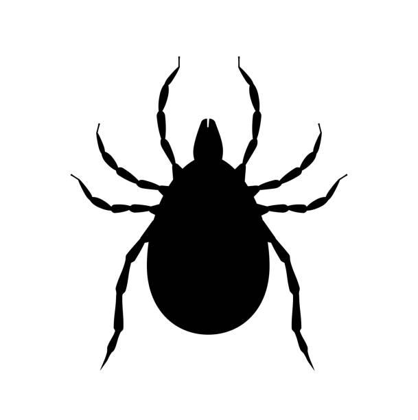 mite schwarze silhouette. schädlingsbekennzeichen. insektiziden-symbol. blutsaug-bug - wunderbaum stock-grafiken, -clipart, -cartoons und -symbole