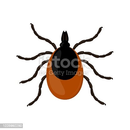 Mite isolated on white background. Insect vector illustration