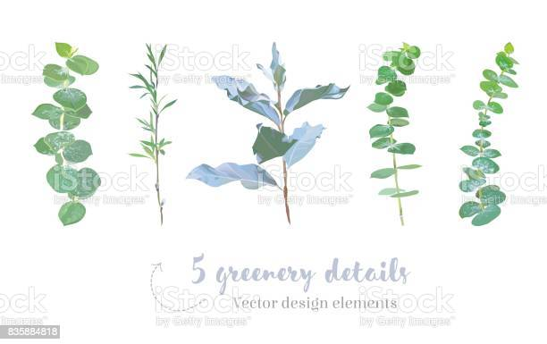 Mix of herbs and plants vector big collection vector id835884818?b=1&k=6&m=835884818&s=612x612&h=nb rc1yqp cn0wlgy53 urjstbdb 62mhemebbbuueu=
