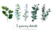 Mix of herbs and plants vector big collection. Cute rustic wedding greenery.True blue eucalyptus, italian ruscus, parvifolia foliage, leaves and stems. Watercolor style set. All elements are isolated.