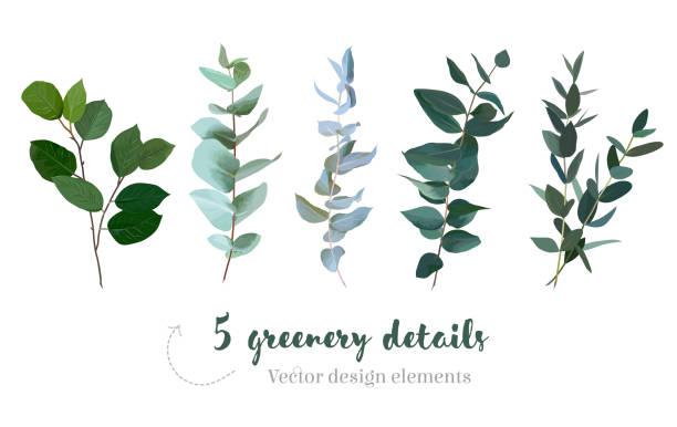 mischung aus kräutern und pflanzen vektor große sammlung - laub winter stock-grafiken, -clipart, -cartoons und -symbole