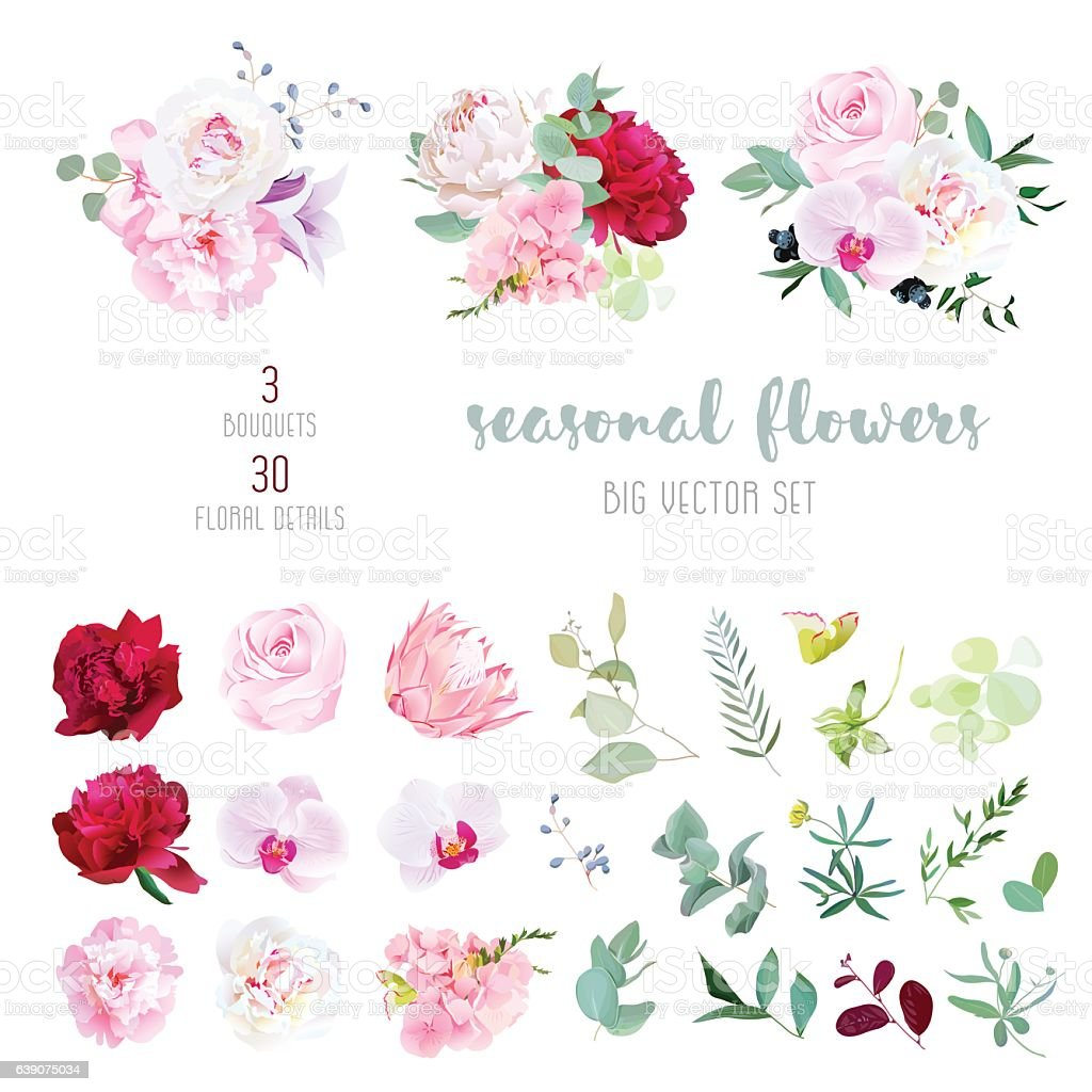 Mix of seasonal flowers and plants big vector collection vector art illustration