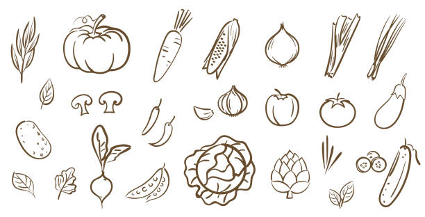 Mix vegetables collection, cute line art vector illustration in cartoon style Mix vegetables collection, cute line art vector illustration in cartoon style garlic stock illustrations