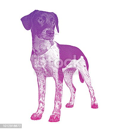 Engraving illustration of a Mixed breed hound dog in animal shelter hoping to be adopted