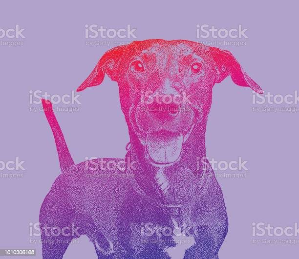 Mixed breed labrador retriever dog in animal shelter hoping to be vector id1010306168?b=1&k=6&m=1010306168&s=612x612&h=x3txx7ouihfd1le4igwlt9a8cg nige4aaw6dvgqppw=
