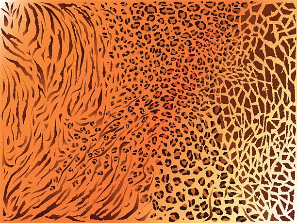 ilustrações, clipart, desenhos animados e ícones de textura de padrão de pele mista backgraund - texturas de pelo de animal