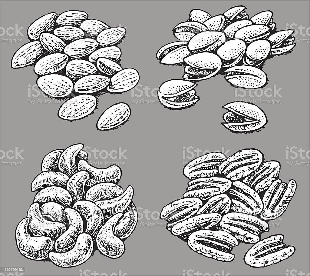 Mixed Nuts - walnut, almond, cashew, pistachio vector art illustration