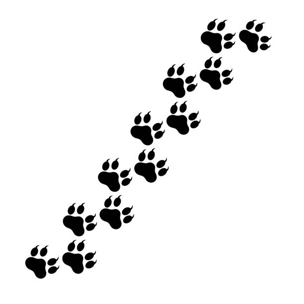 Mobile Paw of the beast, dog tracks. Traces of dog paws, a trace of a cat, the imprint of a trace of a tiger or a lion on a transparent background. Vector illustration eps 10. animal stage stock illustrations