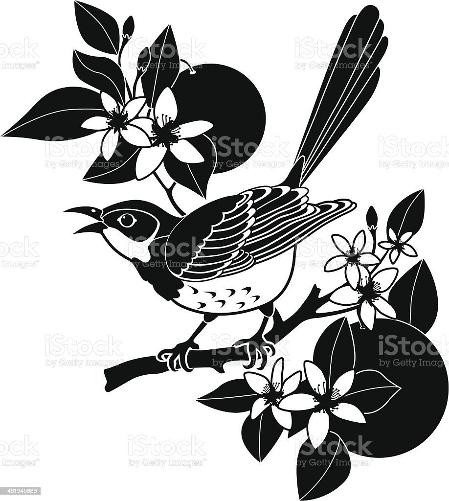 mockingbird and orange blossom stock vector art more images of