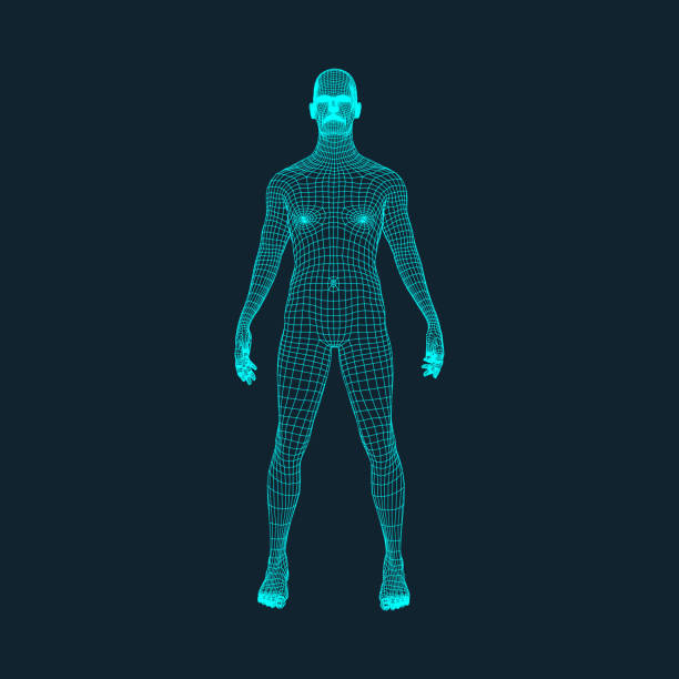 3D Model of Man. Polygonal Design. Geometric Design. Business, Science and Technology Vector Illustration. 3d Polygonal Covering Skin. Human Polygon Body. Human Body Wire Model. 3D Model of Man. Polygonal Design. Geometric Design. Business, Science and Technology Vector Illustration. 3d Polygonal Covering Skin. Human Polygon Body. Human Body Wire Model. human representation stock illustrations