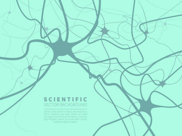 Model of neural system. Scientific vector background for projects on technology, medicine, chemistry, science and education. Model of neural system. Scientific vector background for projects on technology, medicine, chemistry, science and education. neurons stock illustrations