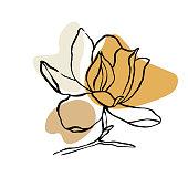 Beautiful white magnolia isolated on black