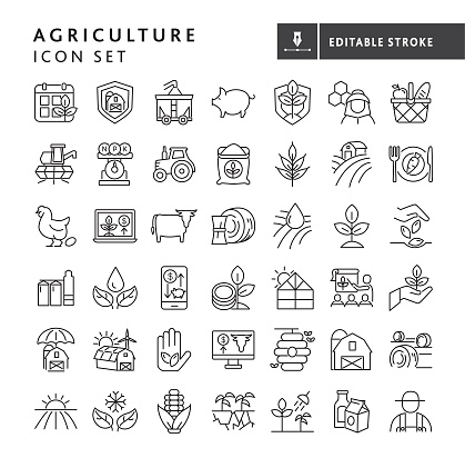 Vector illustration of a big set of 42 farm and agriculture icon concepts thin line style icons. Includes farming schedule, farm protection, harvesting, livestock, bee keeping, farm to table, cash crop prices, irrigation, solar power, growth, planting, seeding concepts, crops dairy farming and farm worker, on white background with no white box below. Fully editable for easy editing. Simple set that includes vector eps and high resolution jpg in download.