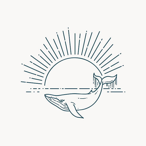 Modern flat linear vector illustration with Whale and sunrise - ilustración de arte vectorial