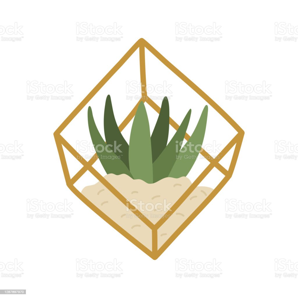 Modern Home Plant Succulent In Golden Geometric Terrarium Stock Illustration Download Image Now Istock