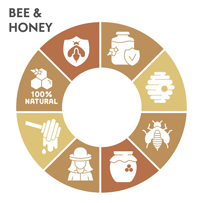 Modern honey Infographic design template. Beekeeping Infographic visualization on white background. Bee-keeper products template for presentation. Creative vector illustration for infographic.