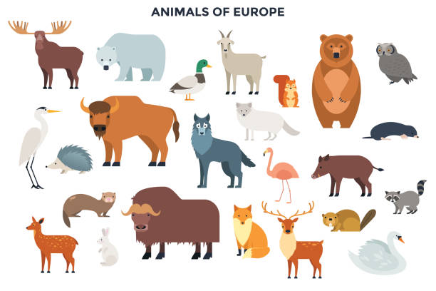 Modern Infographic Template Big collection of cute funny wild European animals and birds. Bundle of adorable cartoon characters isolated on white background. Fauna of Europe. Colorful vector illustration in flat style. heron stock illustrations