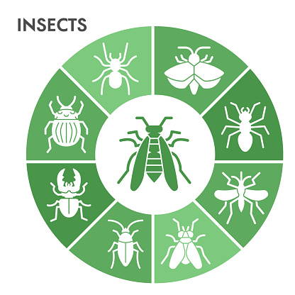 Modern Insects Infographic design template. Bugs and beetles Infographic visualization in bubble design on white background. Insects template for presentation. Creative vector illustration.