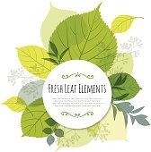 Modern Leaf Design with Copyspace
