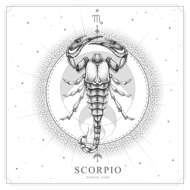 Modern magic witchcraft card with astrology Scorpio zodiac sign. Realistic hand drawing scorpion illustration Modern magic witchcraft card with astrology Scorpio zodiac sign. Realistic hand drawing scorpion illustration scorpio stock illustrations