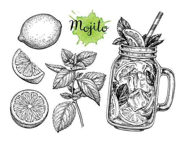Mojito drink and ingredients Lemonad set. Isolated on white background. Hand drawn vector illustration. Retro style ink sketch. lime stock illustrations