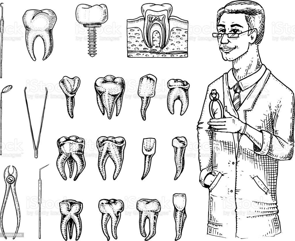 Molaren Zahnschmelz Dentalset Instrumenteausstattung Der Zahnarzt ...