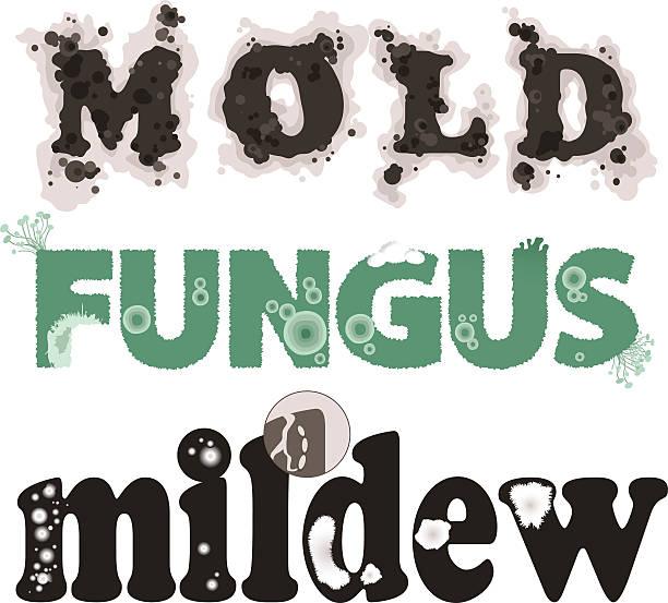 stockillustraties, clipart, cartoons en iconen met mold, fungus and mildew - meeldauw