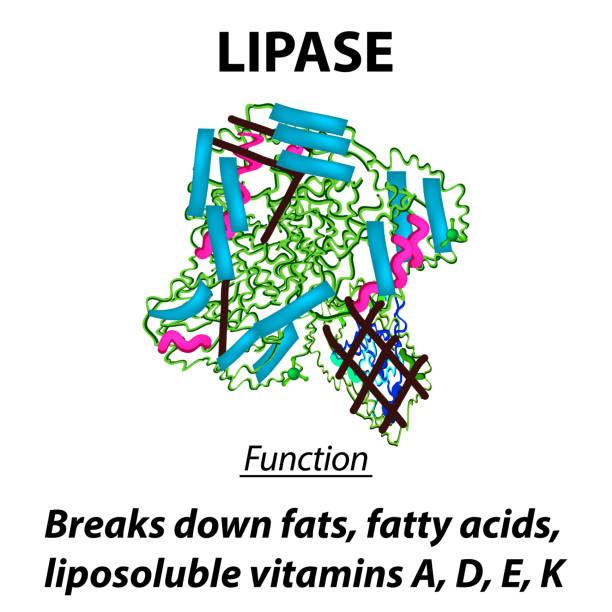 酵素 イラスト素材 Istock