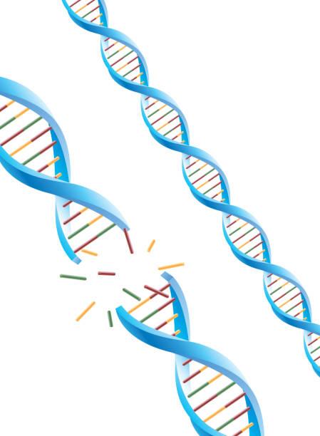 DNA molekularen – Vektorgrafik